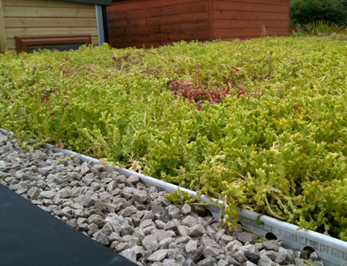 Green Roofing – a Sedum Grass Roof in Midlands