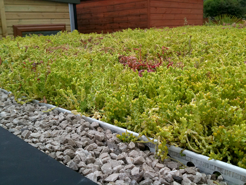 Green Roofing - a Sedum Grass Roof in Midlands